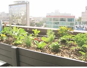 Azoteas verdes en los hospitales de la ciudad de m xico for Jardines en azoteas