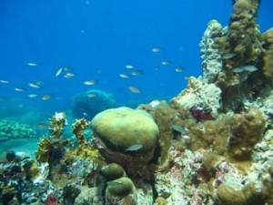 arrecife-veracruzano