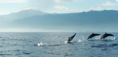 delfines-mar