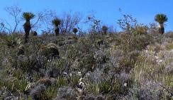 desierto-zacatecas