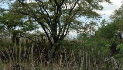 encinos-reserva-pedregal