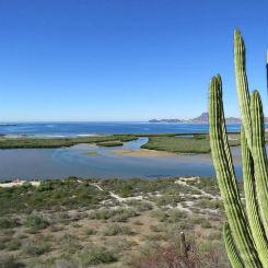 Estero El soldado, Guaymas Sonora. Foto: Conanp