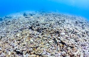 blanqueo-coral