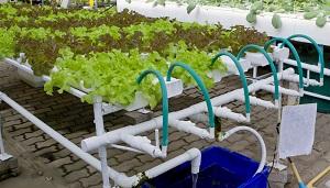 cultivos-sin-suelo