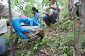 nueva-especie-tortuga-sonora