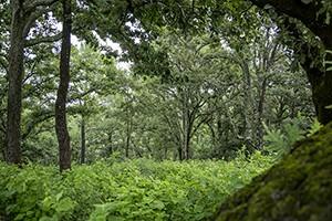 dia-int-bosques-2