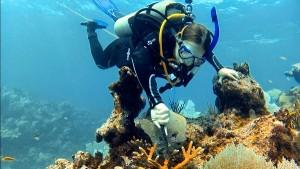 biologa-mexicana-arrecifes